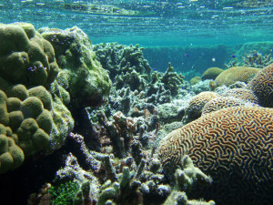 Coral Reef, National Park Service