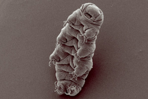 Tardigrade Image: Bob Goldstein and Vicky Madden, UNC Chapel Hill