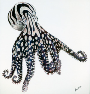 Larger Striped Octopus, by Arcadio Rodaniche