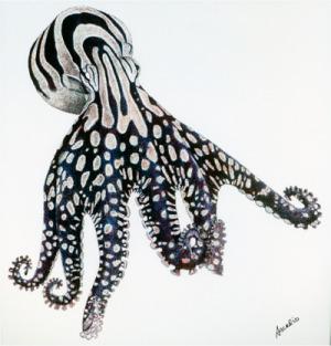 Larger Striped Octopus, by Arcadio Rodaniche