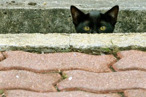 A KITTEN PEERS FROM A SIDEWALK AT BANGKOK'S LUMPINI PARK.