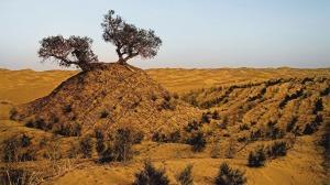 trees-Taklamakan-desert